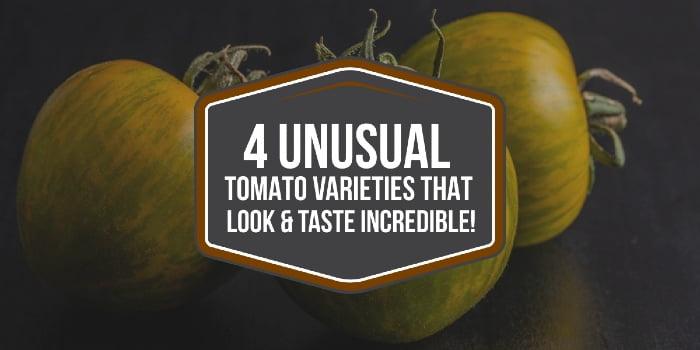 4 Unusual Tomato Varieties That Look & Taste Incredible!