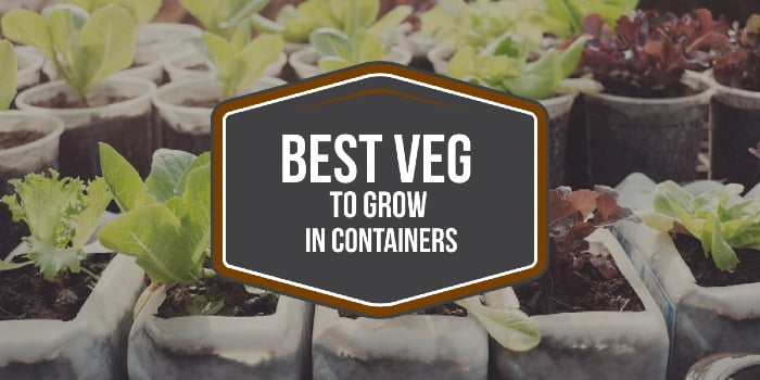 Best Veg To Grow In Containers_