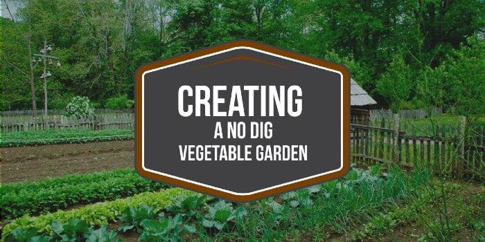 Creating A No Dig Vegetable Garden