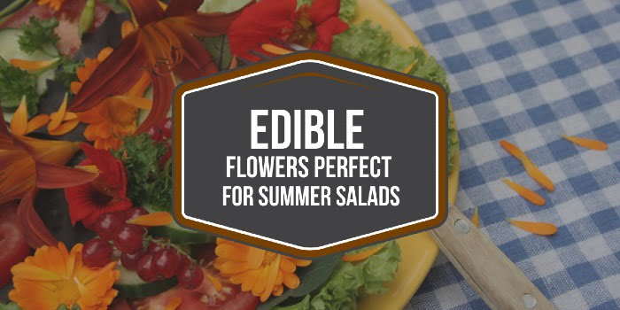 Edible Flowers Perfect For Summer Salads