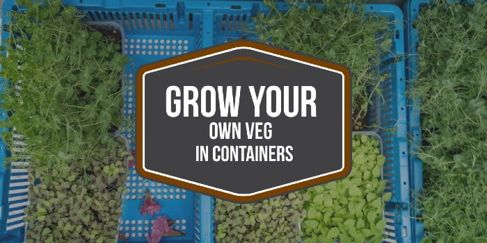 Grow Your Own Veg In Containers