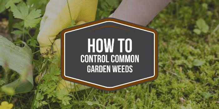 How To Control Common Garden Weeds