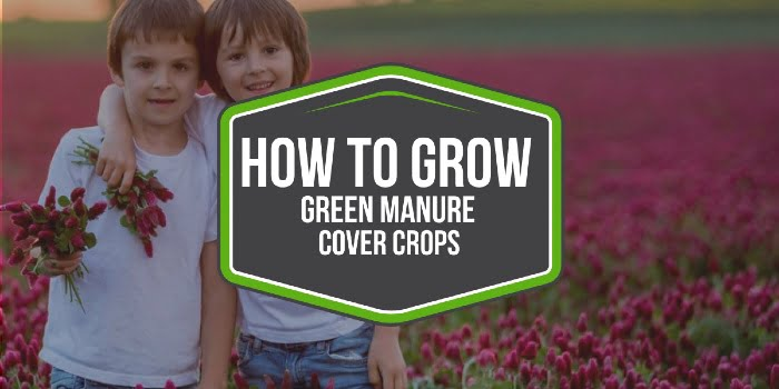How To Grow Green Manure Cover Crops