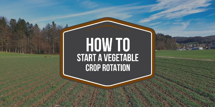 How To Start A Vegetable Crop Rotation