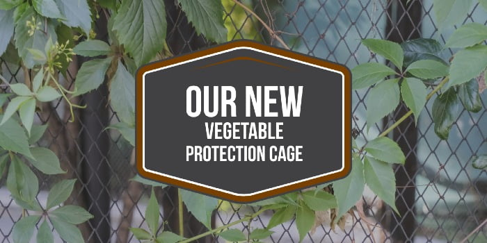 Our New Vegetable Protection Cage