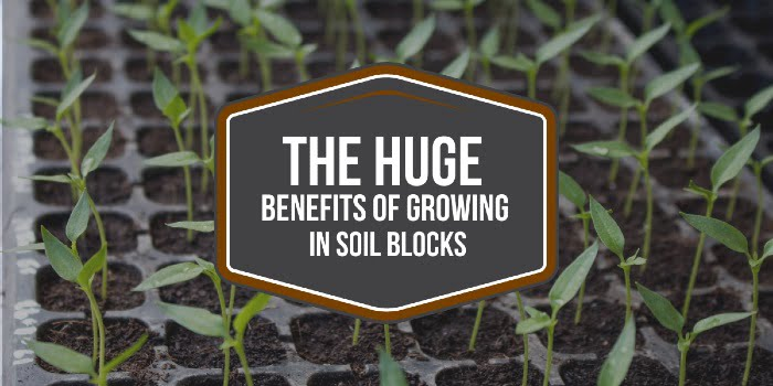 The HUGE Benefits Of Growing In Soil Blocks