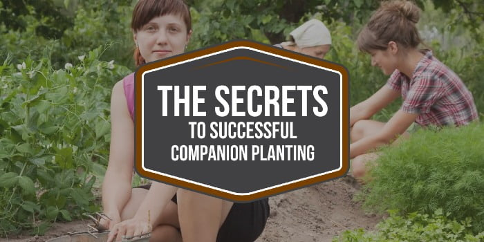 The Secrets To Successful Companion Planting