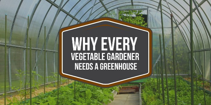 Why Every Vegetable Gardener Needs A Greenhouse