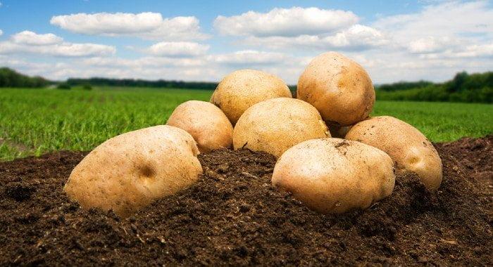 potatoes on the floor