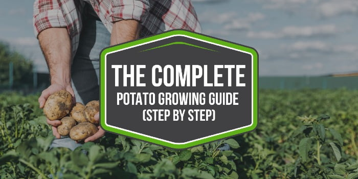 The COMPLETE Potato Growing Guide (step by step)